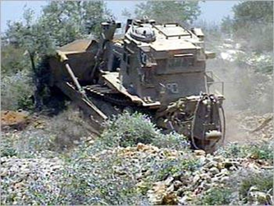 In November 2000 Settlers and the Israeli Army cut or burnt 4000 Aboud Olive Trees.