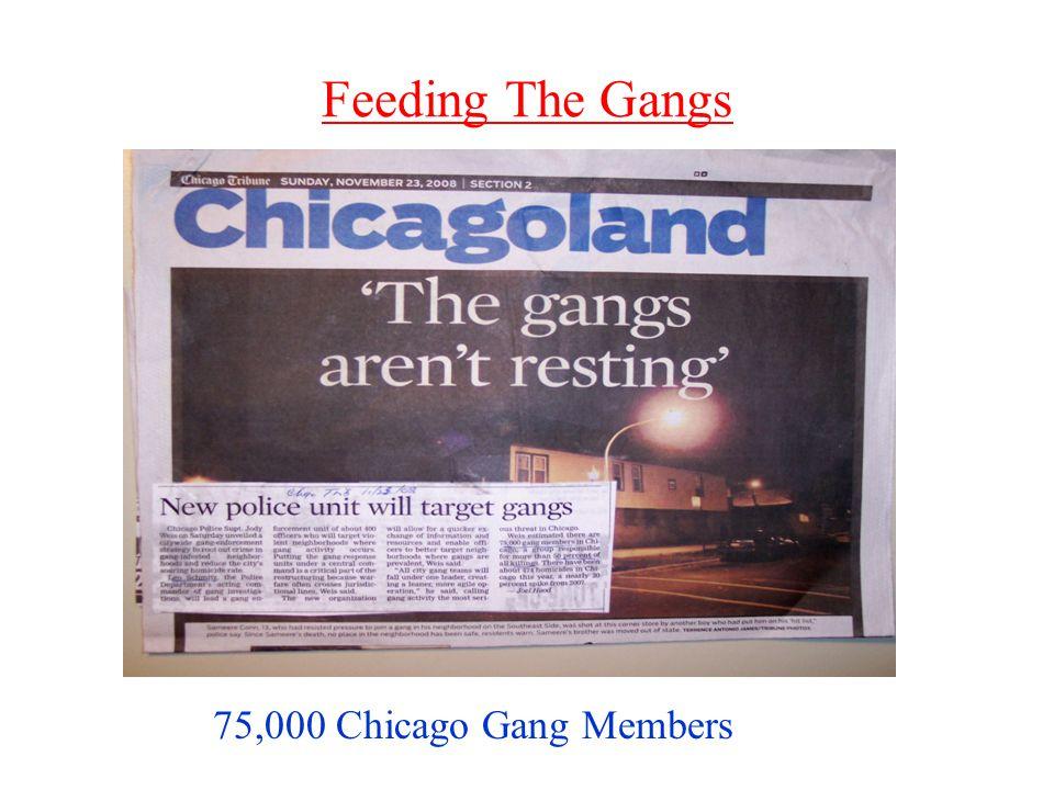 Feeding The Gangs 75,000 Chicago Gang Members