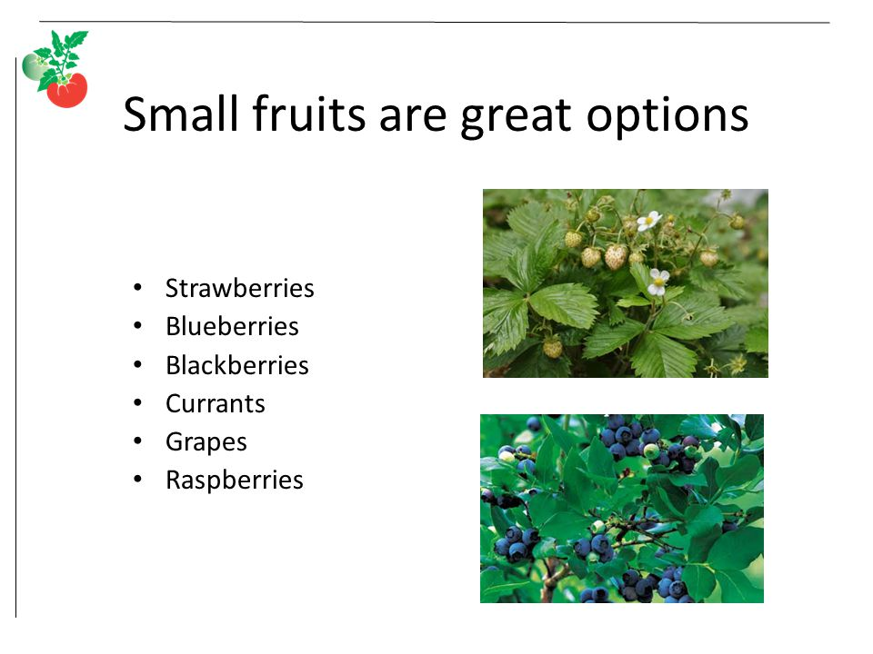 Small fruits are great options Strawberries Blueberries Blackberries Currants Grapes Raspberries