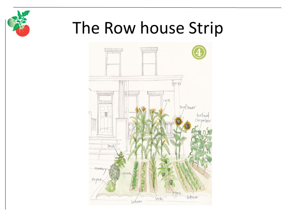 The Row house Strip