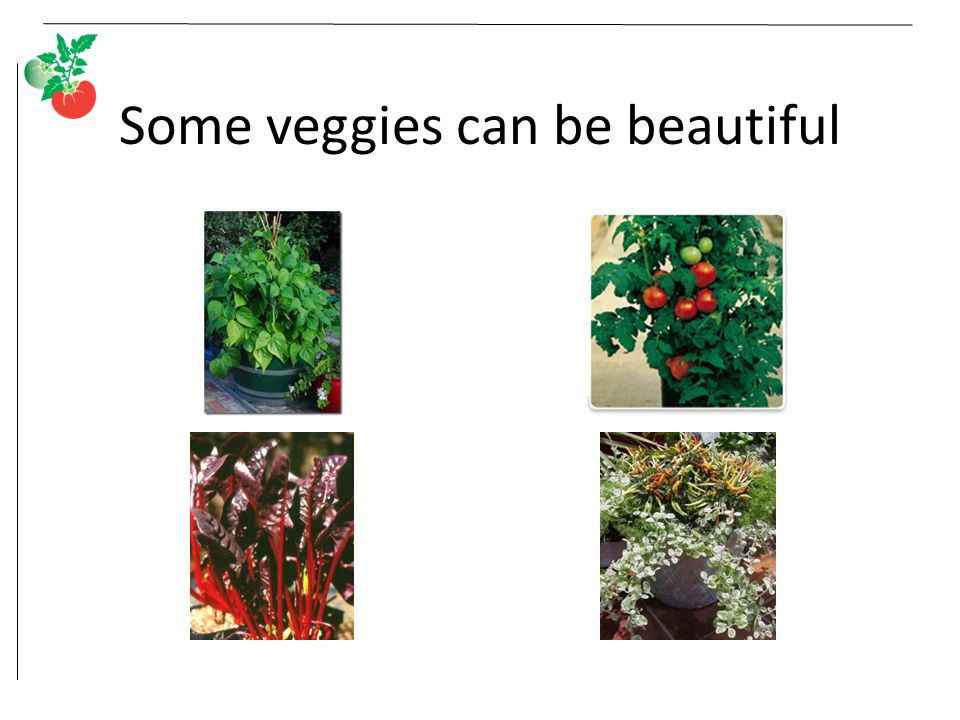 Some veggies can be beautiful