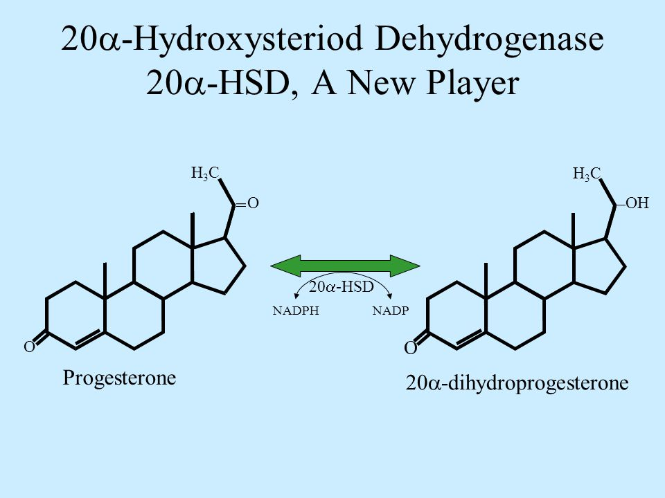 20  -Hydroxysteriod Dehydrogenase 20  -HSD, A New Player Progesterone 20  -dihydroprogesterone NADPHNADP H3CH3C O O H3CH3C OH 20  -HSD