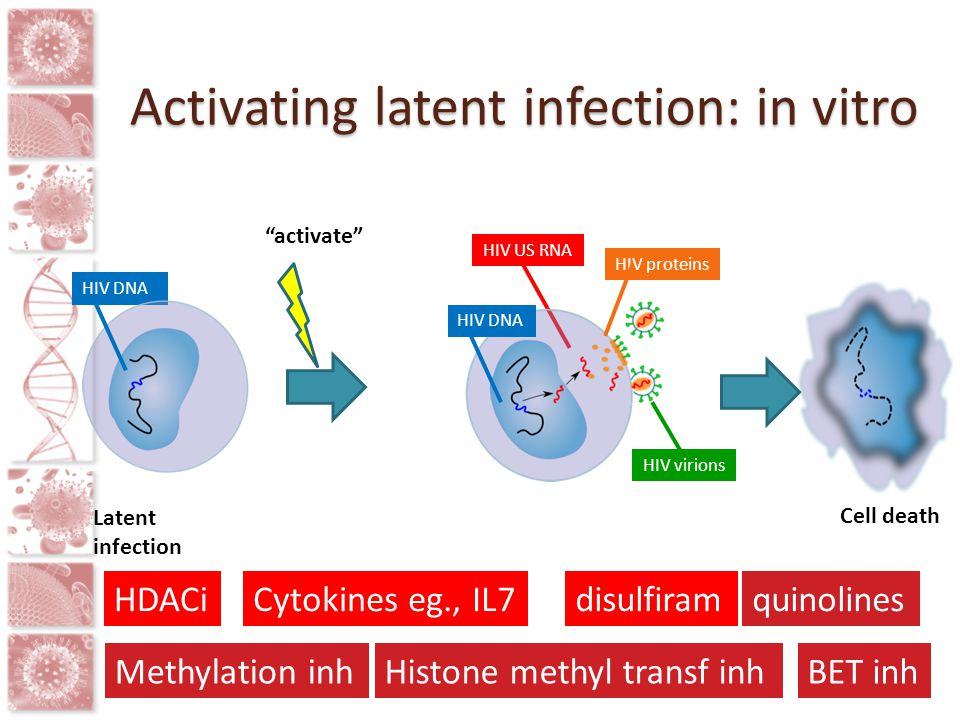 "HIV DNA HIV US RNA HIV DNA HIV proteins HIV virions Latent infection ""activate"" Cell death HDACi Methylation inh Cytokines eg., IL7disulfiramquinoline"