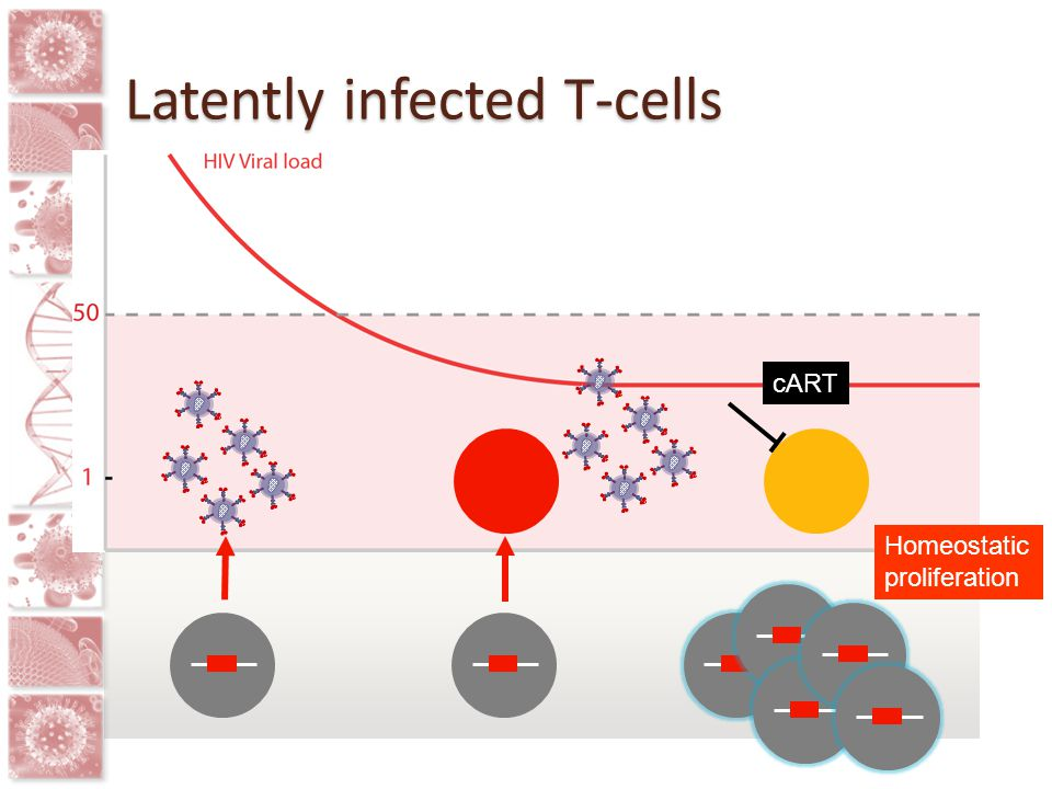 Latently infected cell lines e.g., J-Lat, ACH2, U1 Constantly dividing Clonal Integrate in heterochromatin Latently infected primary T-cells Resting cells High frequency of latency Pre and post activation models Resting CD4+ T-cells from HIV-infected patients on ART Often needs leukapharesis Frequency of latency low Mechanistic studies difficult Highly variable responses Identifying latency reversing agents (LRA) in vitro