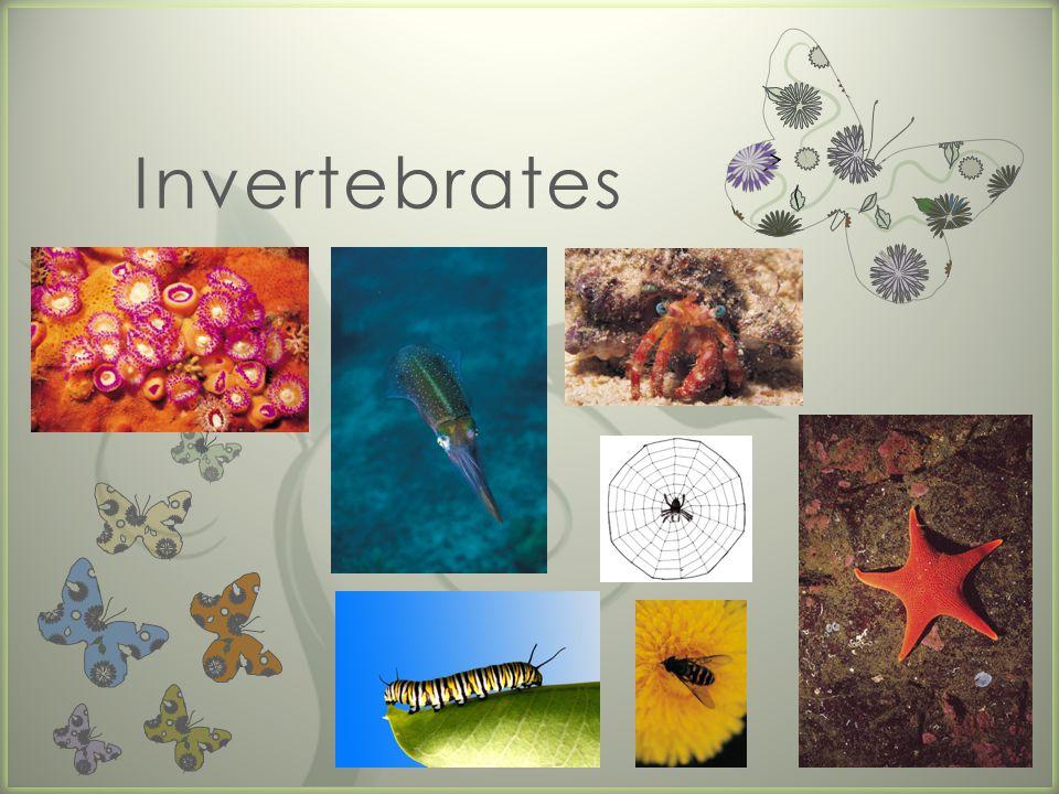 7 Invertebrates