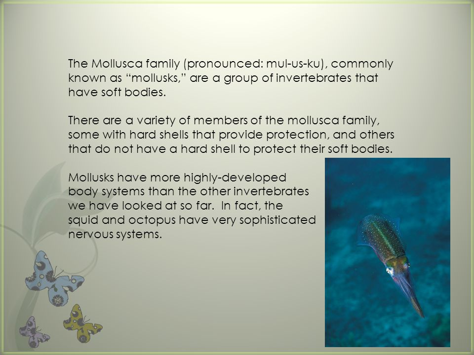 The Mollusca family (pronounced: mul-us-ku), commonly known as mollusks, are a group of invertebrates that have soft bodies.