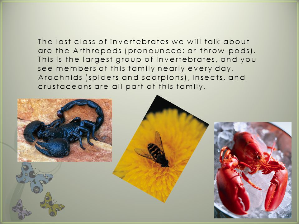 The last class of invertebrates we will talk about are the Arthropods (pronounced: ar-throw-pods).