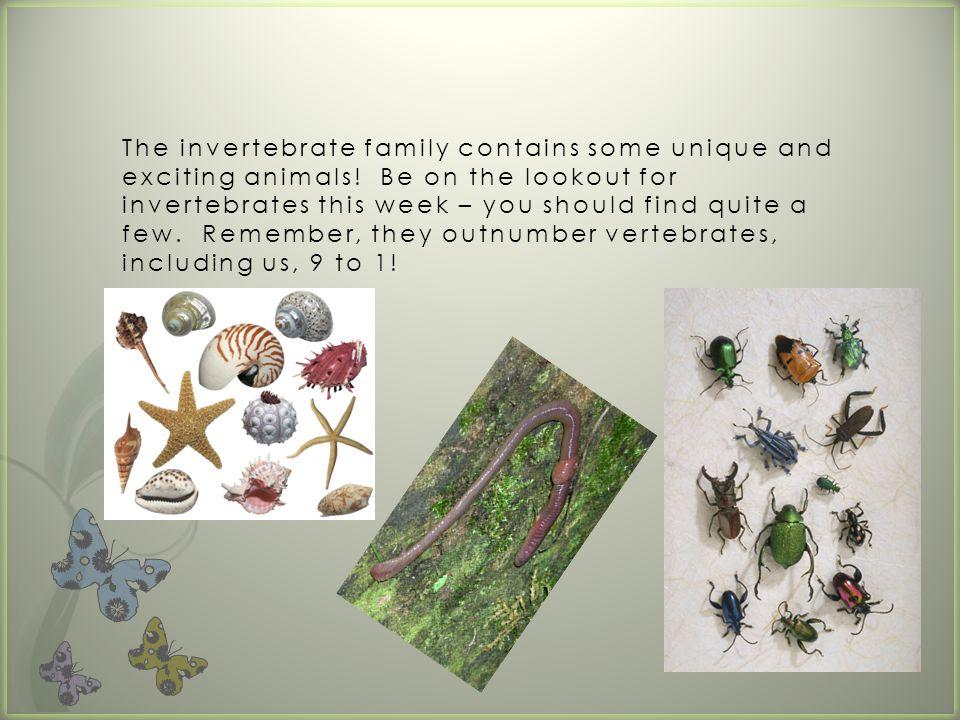 The invertebrate family contains some unique and exciting animals.