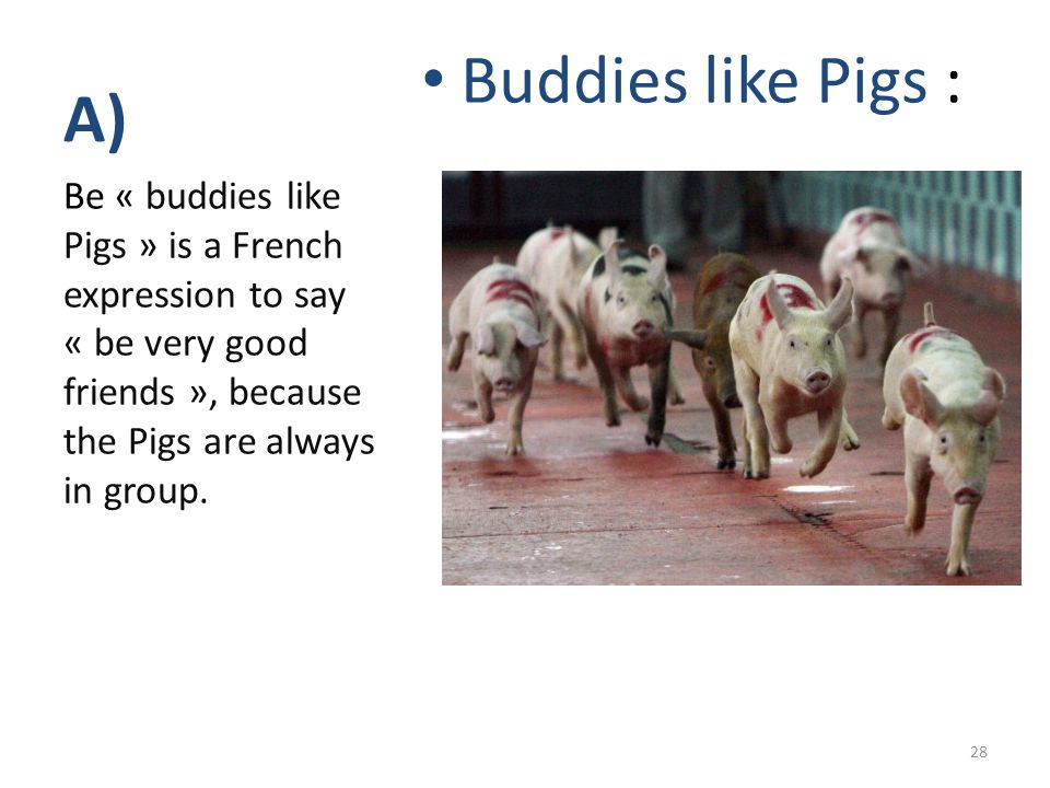 A) Buddies like Pigs : Be « buddies like Pigs » is a French expression to say « be very good friends », because the Pigs are always in group. 28