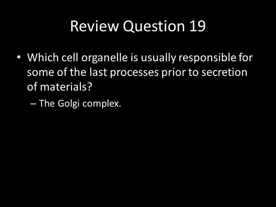 Review Question 20 How is a prokaryote similar to a mitochondrion.