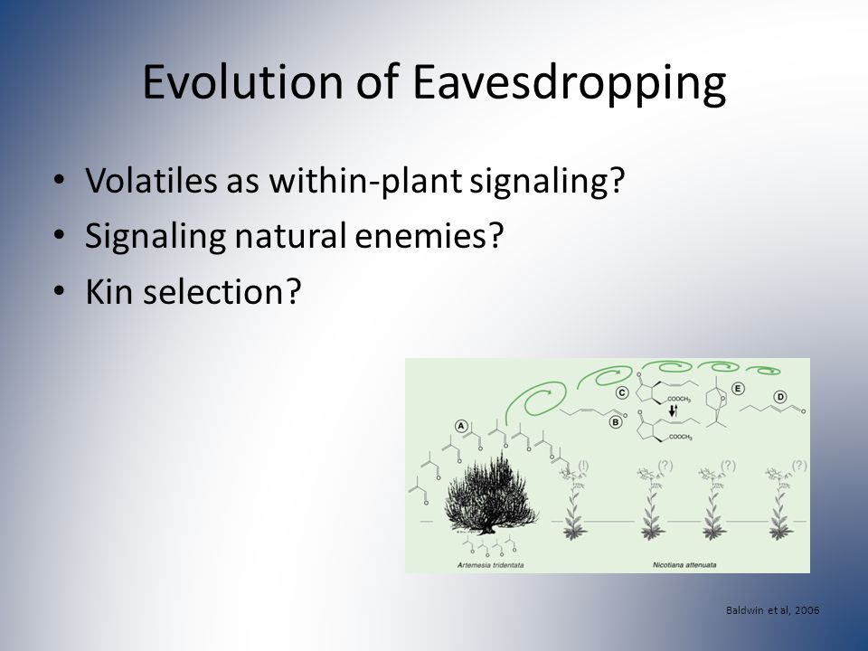 Evolution of Eavesdropping Volatiles as within-plant signaling.