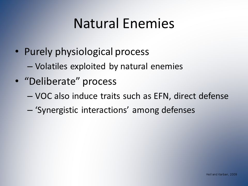 Natural Enemies Purely physiological process – Volatiles exploited by natural enemies Deliberate process – VOC also induce traits such as EFN, direct defense – 'Synergistic interactions' among defenses Heil and Karban, 2009