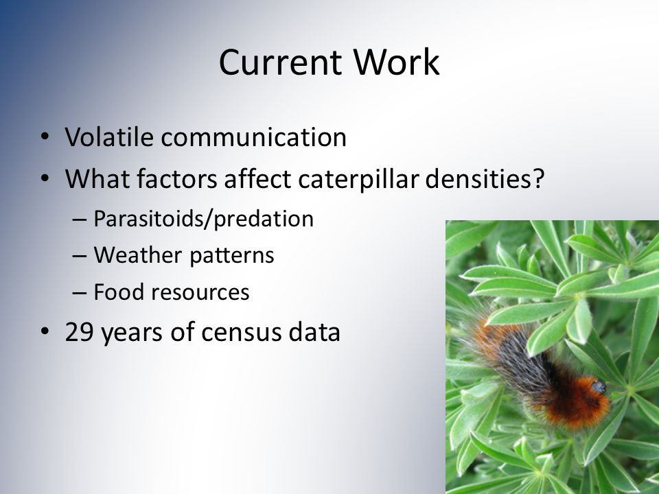 Current Work Volatile communication What factors affect caterpillar densities.