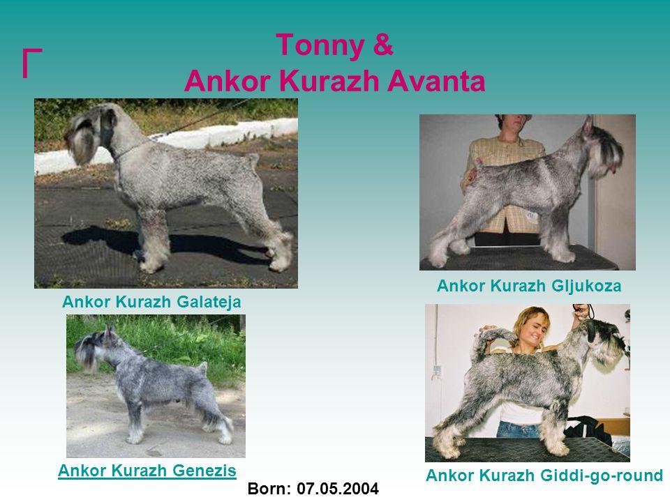 Tonny & Ankor Kurazh Avanta Ankor Kurazh Galateja Ankor Kurazh Giddi-go-round Born: 07.05.2004 Г Ankor Kurazh Genezis Ankor Kurazh Gljukoza