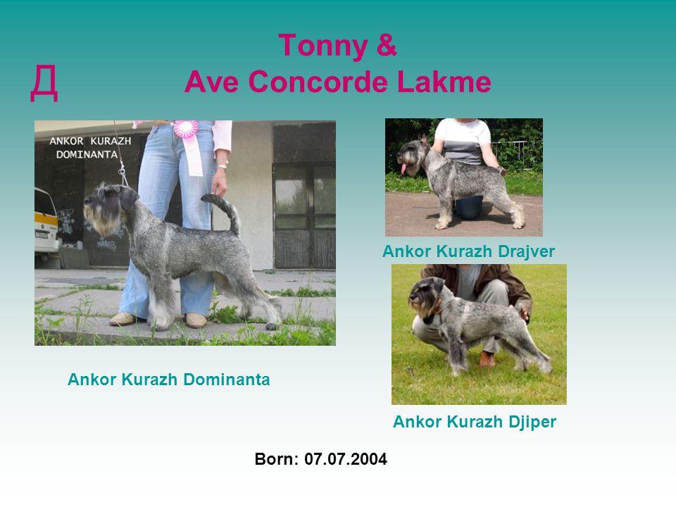 Tonny & Ave Concorde Lakme Д Born: 07.07.2004 Ankor Kurazh Dominanta Ankor Kurazh Drajver Ankor Kurazh Djiper