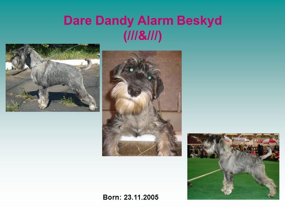 Dare Dandy Alarm Beskyd (///&///) Born: 23.11.2005