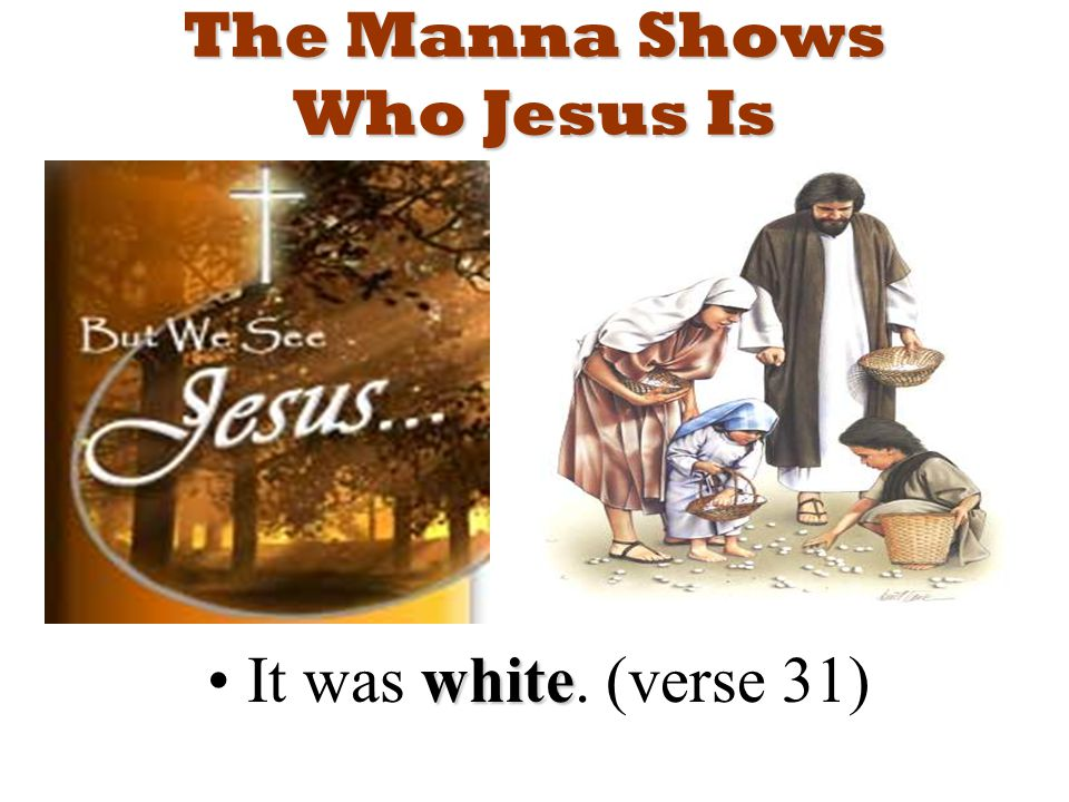 The Manna Shows Who Jesus Is whiteIt was white. (verse 31)