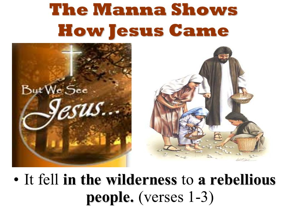The Manna Shows How Jesus Came in the wildernessa rebellious people.It fell in the wilderness to a rebellious people.