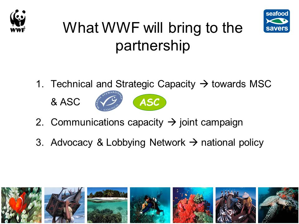 What WWF will bring to the partnership 1.Technical and Strategic Capacity  towards MSC & ASC 2.Communications capacity  joint campaign 3.Advocacy & Lobbying Network  national policy ASC
