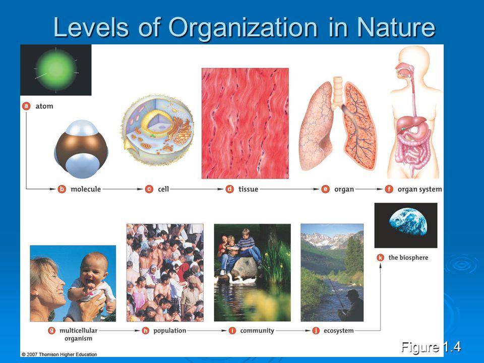 Levels of Organization in Nature Figure 1.4