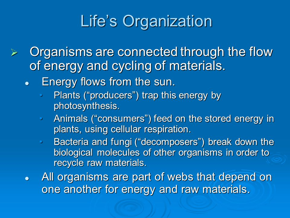 Life's Organization  Organisms are connected through the flow of energy and cycling of materials.