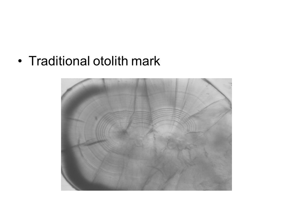 Traditional otolith mark
