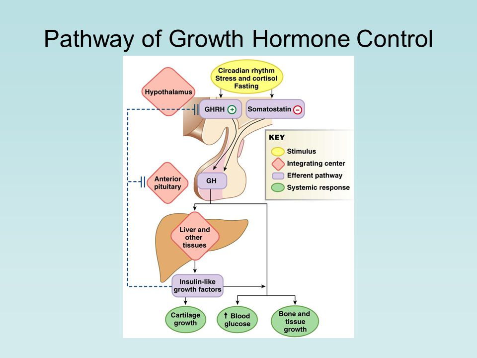 Pathway of Growth Hormone Control