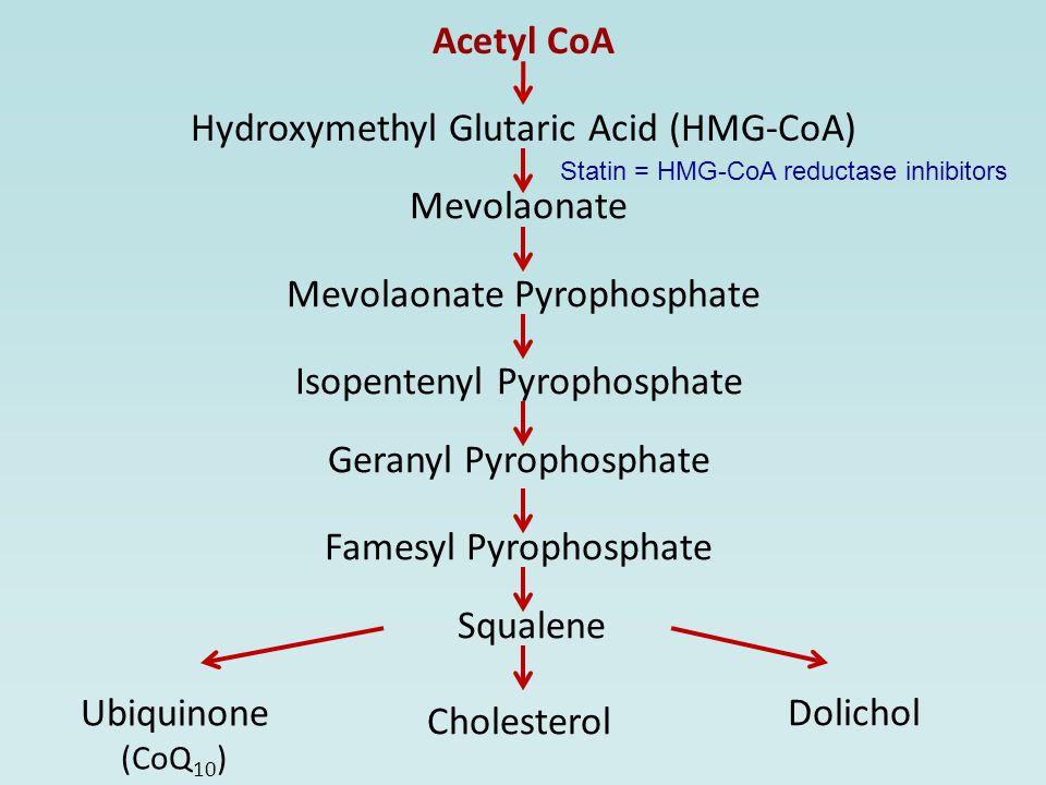 Acetyl CoA Hydroxymethyl Glutaric Acid (HMG-CoA) Mevolaonate Mevolaonate Pyrophosphate Isopentenyl Pyrophosphate Geranyl Pyrophosphate Famesyl Pyrophosphate Squalene Cholesterol Ubiquinone (CoQ 10 ) Dolichol Statin = HMG-CoA reductase inhibitors