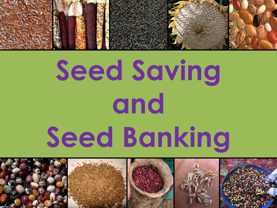 How Can We Save our own Seeds.