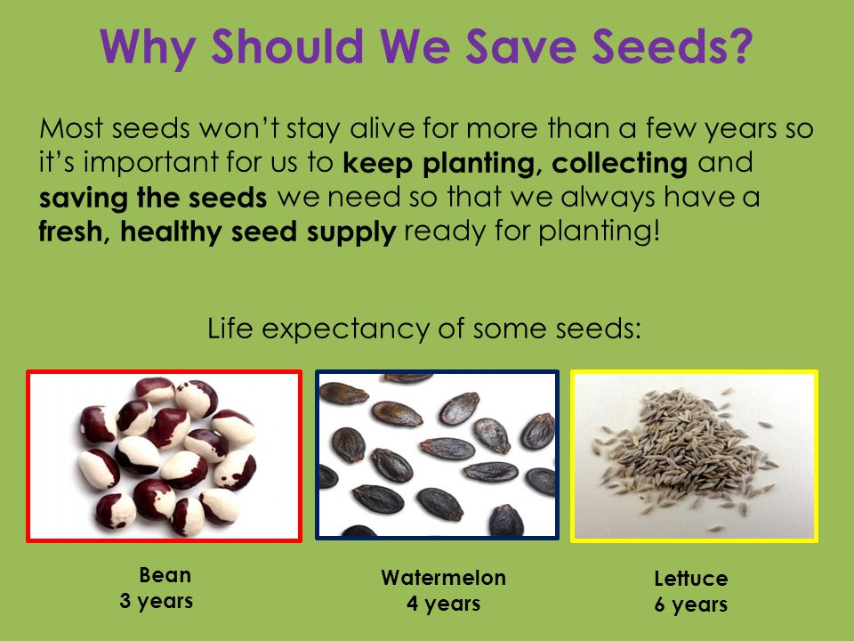 Congratulations.You are a seed saver.