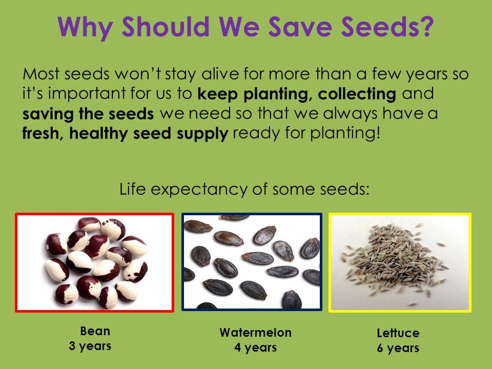 Why else should we save seeds.We save seeds......