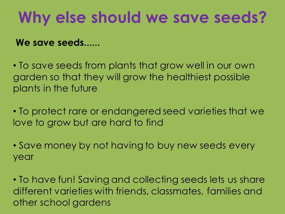 Why else should we save seeds. We save seeds......
