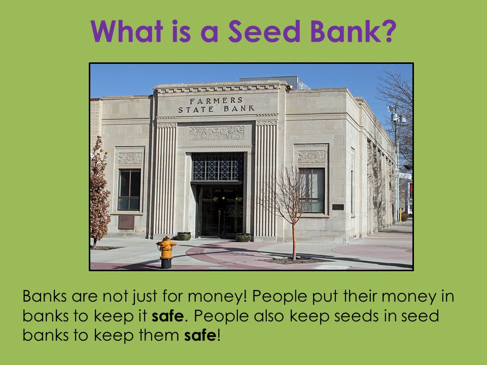 What is a Seed Bank. Banks are not just for money.