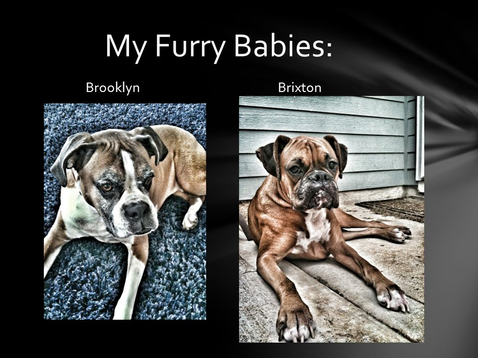 Brooklyn Brixton My Furry Babies: