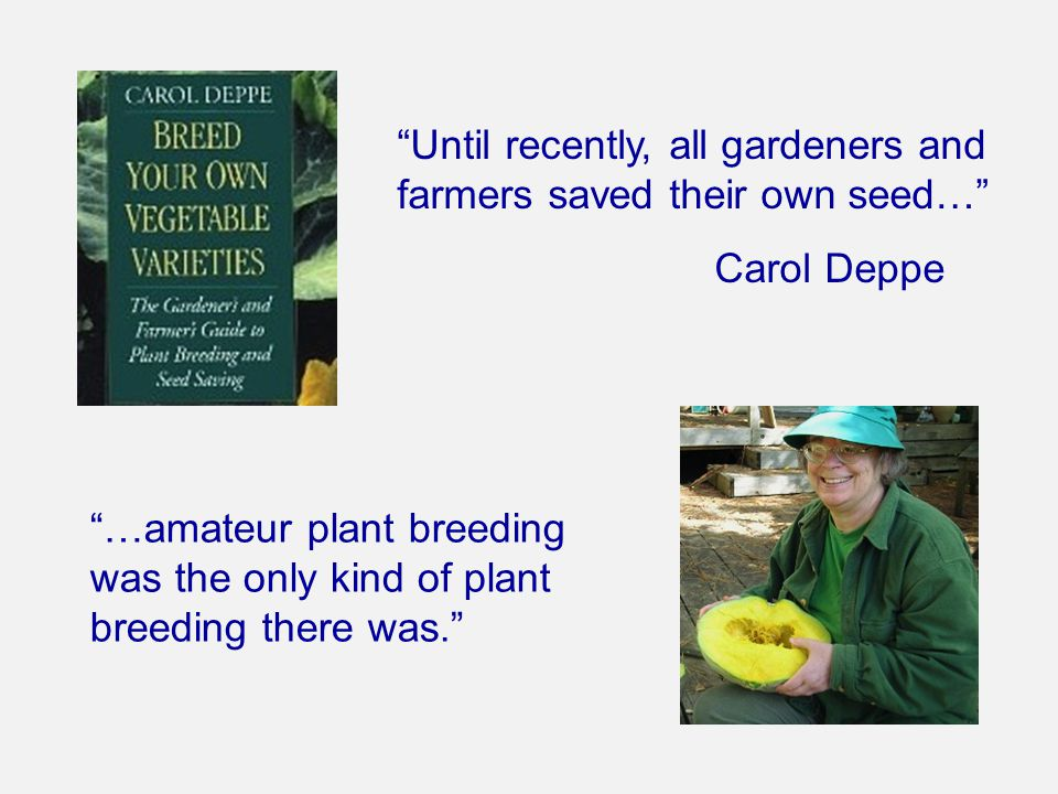 """Until recently, all gardeners and farmers saved their own seed…"" Carol Deppe ""…amateur plant breeding was the only kind of plant breeding there was."""