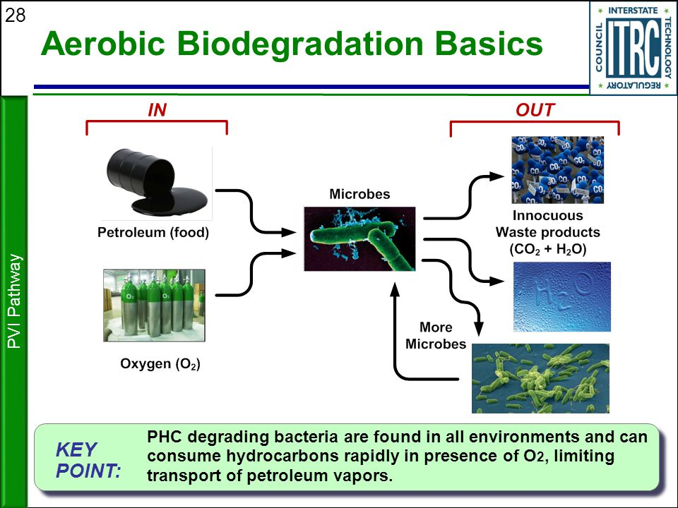 28 Aerobic Biodegradation Basics Many bacteria PVI Pathway KEY POINT: PHC degrading bacteria are found in all environments and can consume hydrocarbon