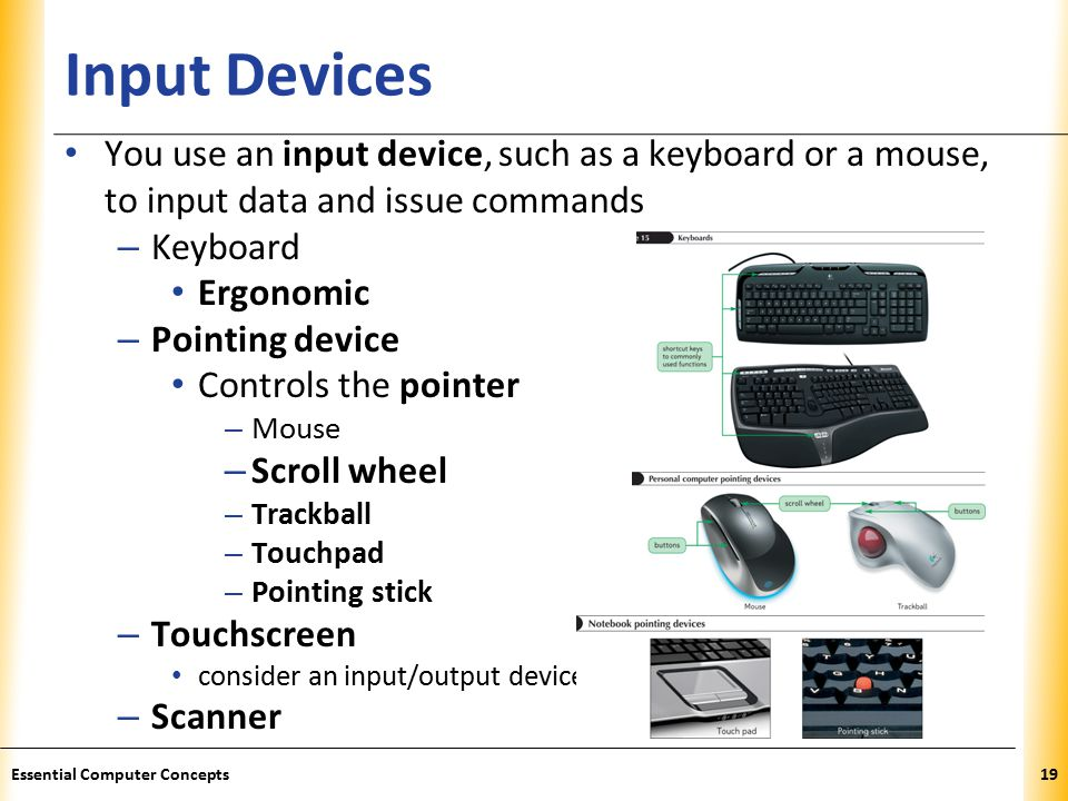 XP Input Devices You use an input device, such as a keyboard or a mouse, to input data and issue commands – Keyboard Ergonomic – Pointing device Controls the pointer – Mouse – Scroll wheel – Trackball – Touchpad – Pointing stick – Touchscreen consider an input/output device – Scanner 19Essential Computer Concepts