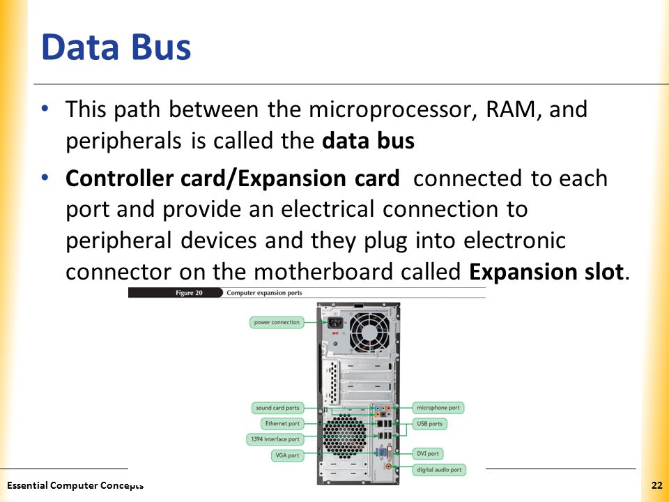 XP Data Bus This path between the microprocessor, RAM, and peripherals is called the data bus Controller card/Expansion card connected to each port and provide an electrical connection to peripheral devices and they plug into electronic connector on the motherboard called Expansion slot.