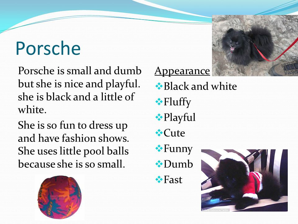 Porsche Porsche is small and dumb but she is nice and playful.