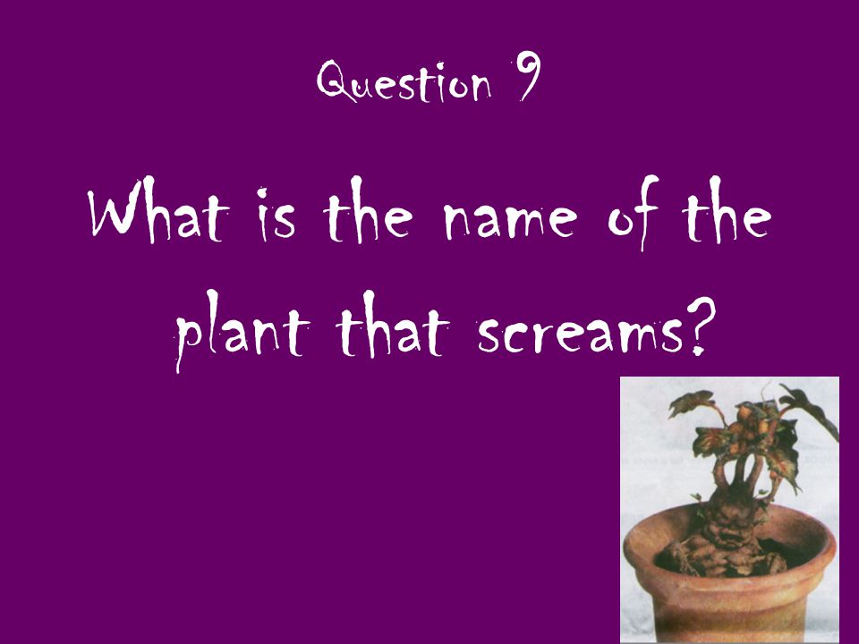Question 9 What is the name of the plant that screams