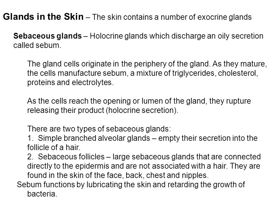 Glands in the Skin – The skin contains a number of exocrine glands Sebaceous glands – Holocrine glands which discharge an oily secretion called sebum.