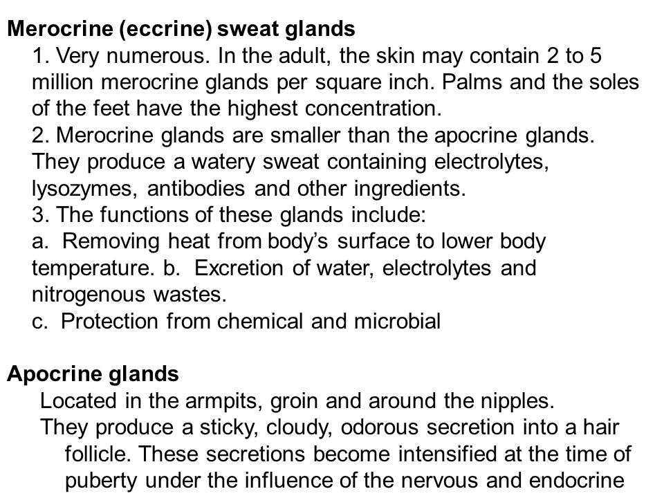 Merocrine (eccrine) sweat glands 1. Very numerous. In the adult, the skin may contain 2 to 5 million merocrine glands per square inch. Palms and the s