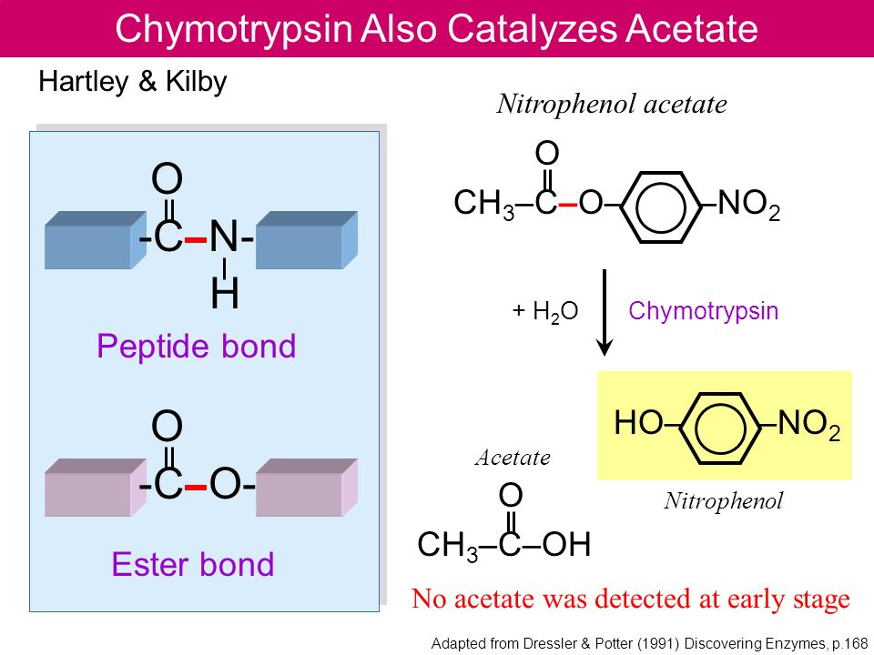 Chymotrypsin Also Catalyzes Acetate O -C N- H O -C O- Peptide bond Ester bond O CH 3 –C–O– –NO 2 Nitrophenol acetate HO– –NO 2 O CH 3 –C–OH Hartley & Kilby Chymotrypsin+ H 2 O Nitrophenol Acetate No acetate was detected at early stage Adapted from Dressler & Potter (1991) Discovering Enzymes, p.168