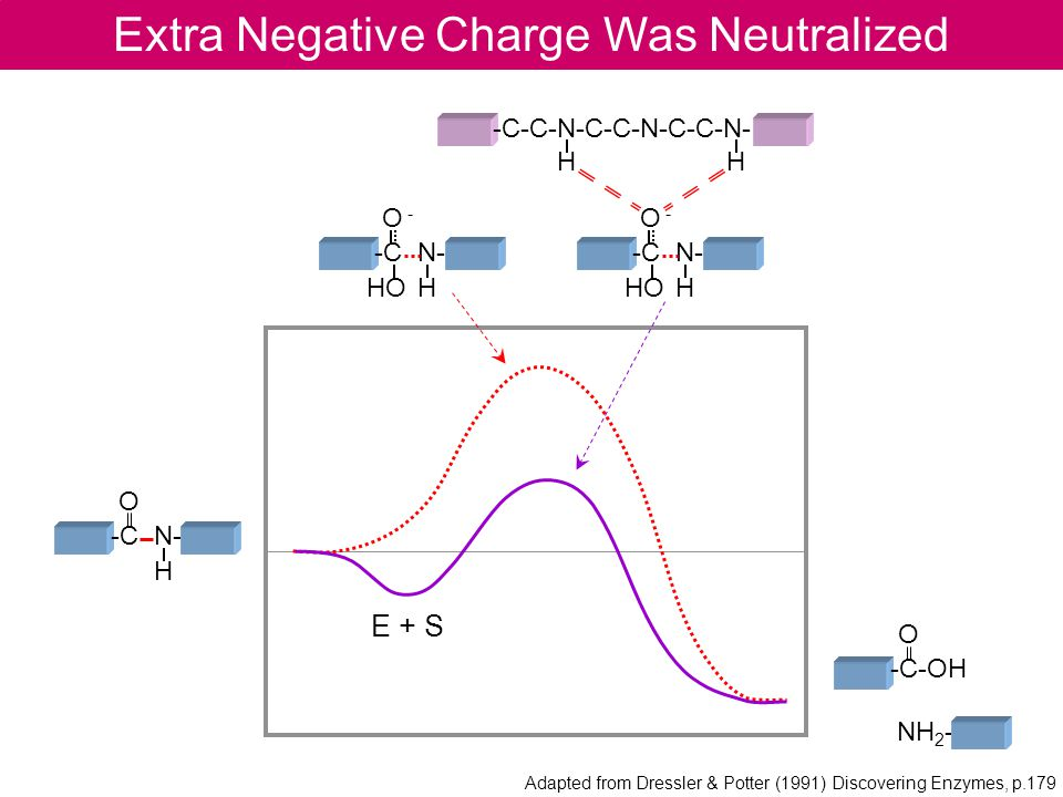 Extra Negative Charge Was Neutralized O -C N- H O -C-OH NH 2 - -C-C-N-C-C-N-C-C-N- H H E + S Adapted from Dressler & Potter (1991) Discovering Enzymes, p.179 O - -C N- HO H O - -C N- HO H