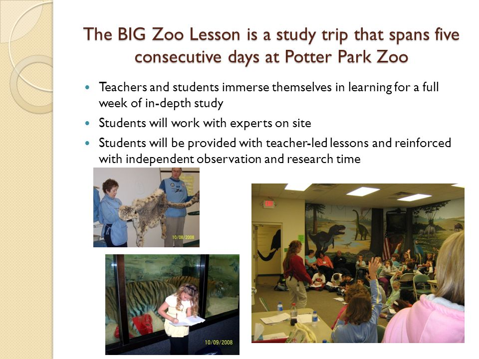 The BIG Zoo Lesson is a study trip that spans five consecutive days at Potter Park Zoo Teachers and students immerse themselves in learning for a full week of in-depth study Students will work with experts on site Students will be provided with teacher-led lessons and reinforced with independent observation and research time