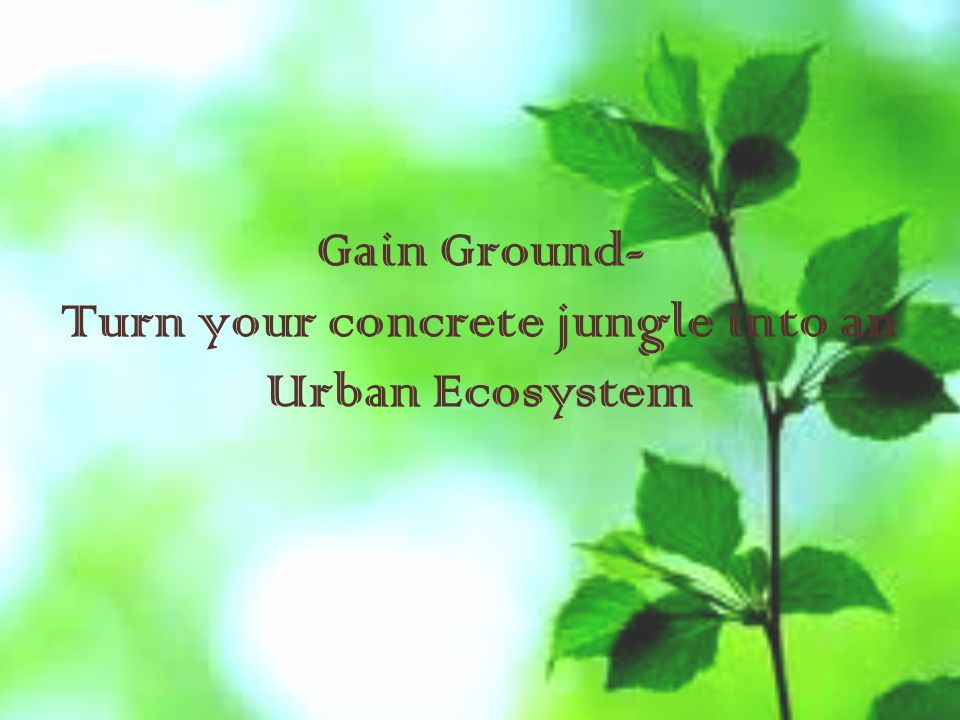 Gain Ground- Turn your concrete jungle into an Urban Ecosystem