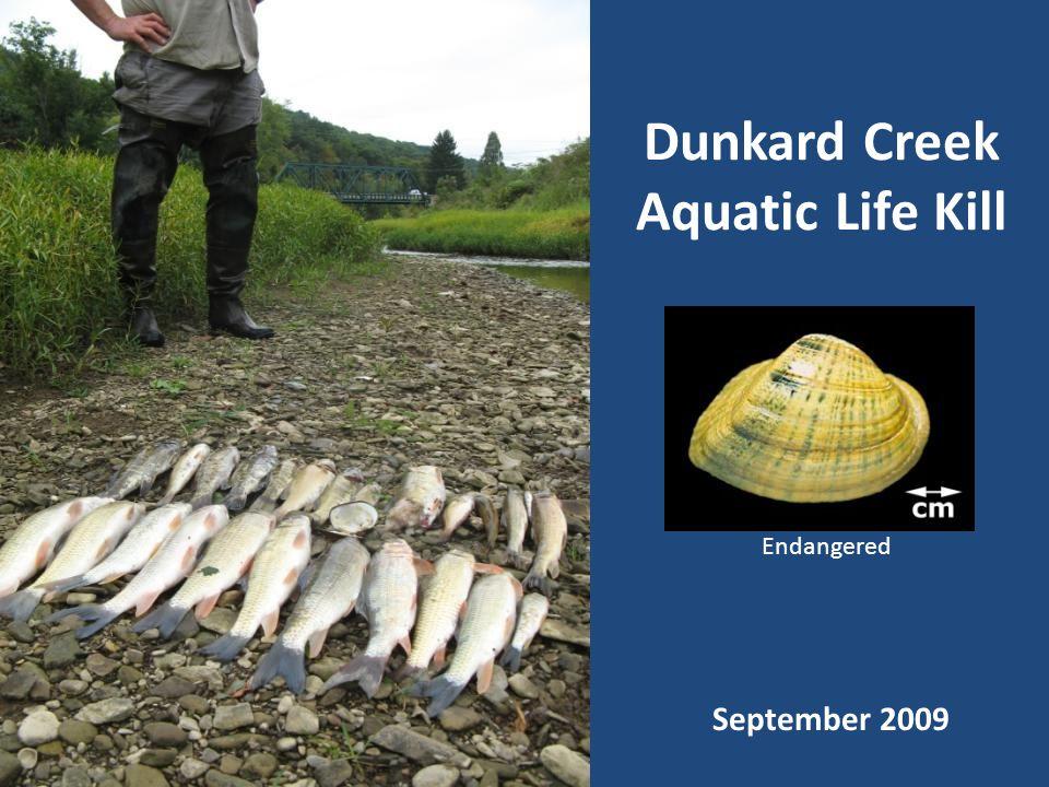 Dunkard Creek Aquatic Life Kill Endangered September 2009