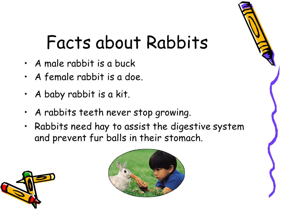 Facts about Rabbits A male rabbit is a buck A female rabbit is a doe.