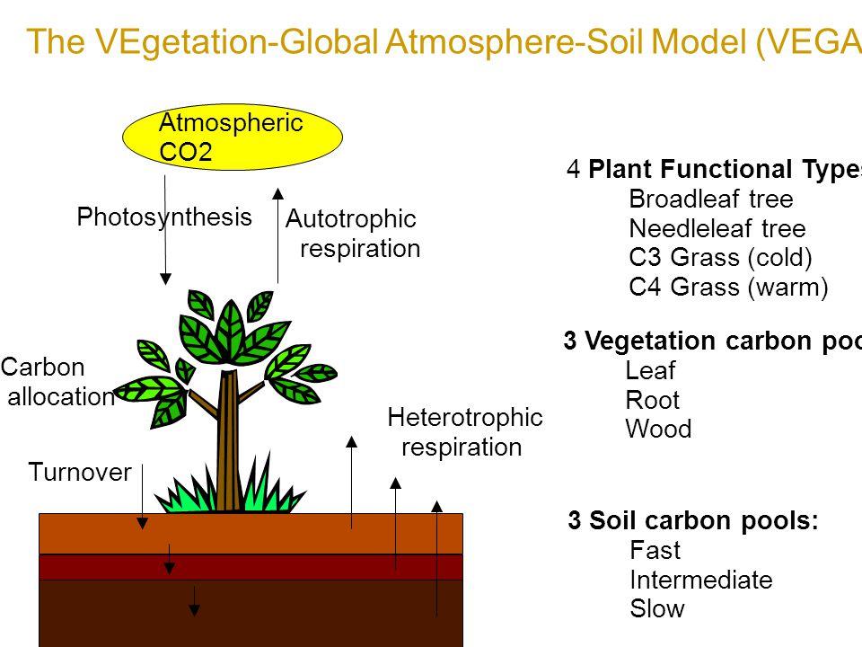 Carbon Pool (GtC) and Flux Cleaf (15) Cwood (605) Croot (21) Fast soil ( 307) Med soil ( 610) Slow soil ( 931 ) GPP Ra Rh GPP = NPP + Ra NEP = NPP - Rh NEE = - NEP Total carbon pool Cvege CLeaf + Cwood + Croot Csoil Csfast + Csmed + Csslow Concept of VEGAS