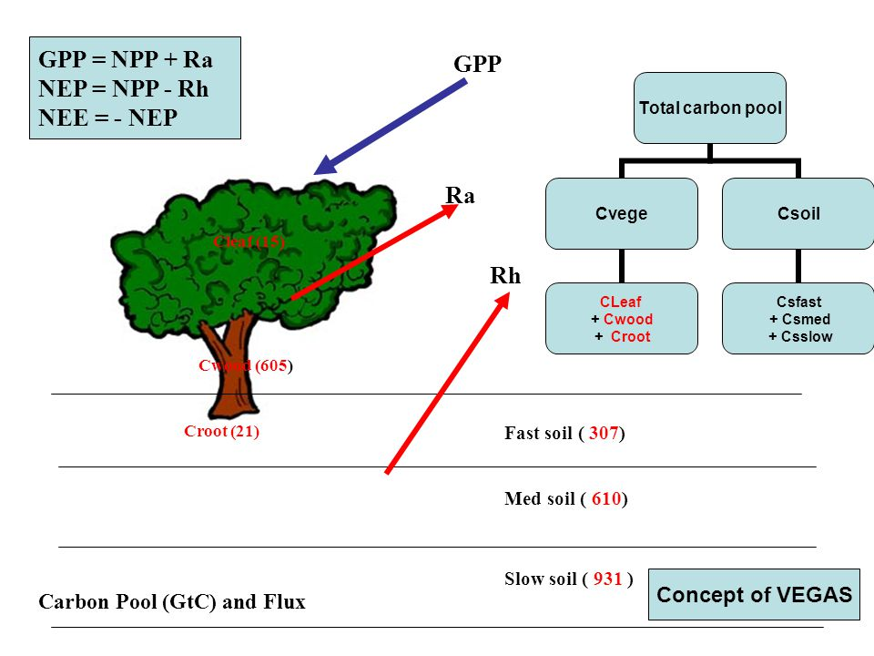 Carbon Pool (GtC) and Flux Cleaf (15) Cwood (605) Croot (21) Fast soil ( 307) Med soil ( 610) Slow soil ( 931 ) GPP Ra Rh GPP = NPP + Ra NEP = NPP - Rh NEE = - NEP Total carbon pool Cvege CLeaf + Cwood + Croot Csoil Csfast + Csmed + Csslow Concept of VEGAS